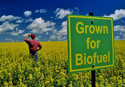 "the use of biofuels to save the planet Many people think this word is synonymous with ""corn ethanol"" it should not be   and the sustainable use of biomass for energy requires very strict government  oversight ultimately  craig spelch, save it, while we can answered sep 7."